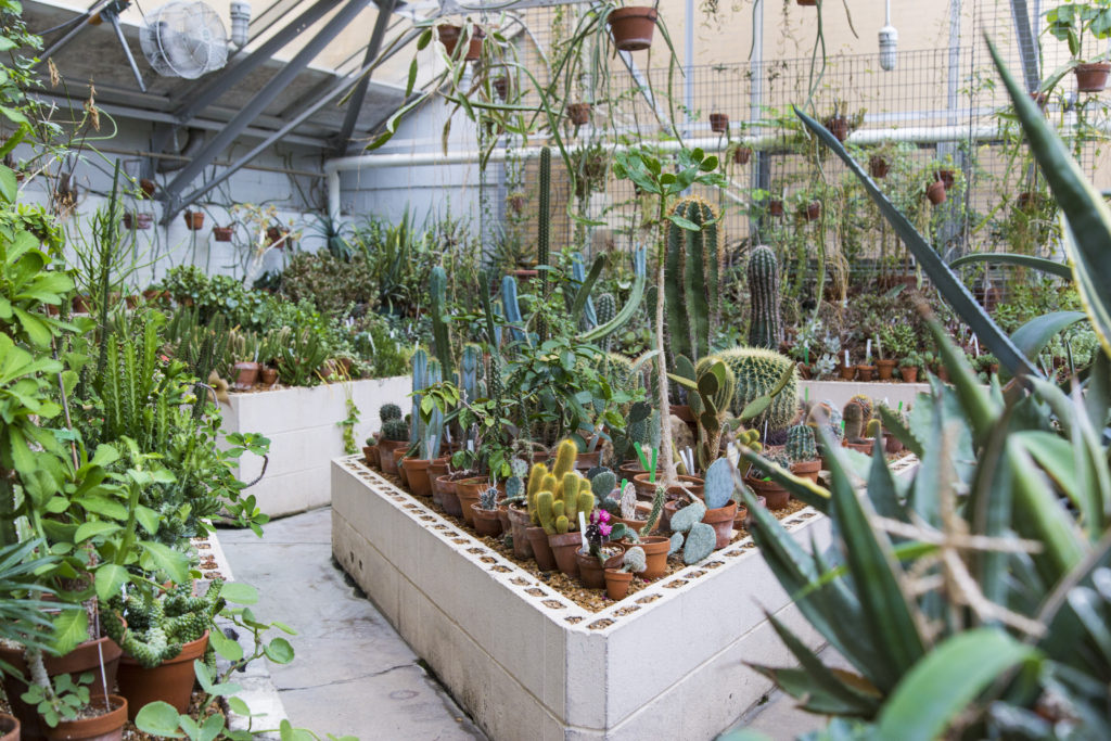 Botany Greenhouse in Birge Hall