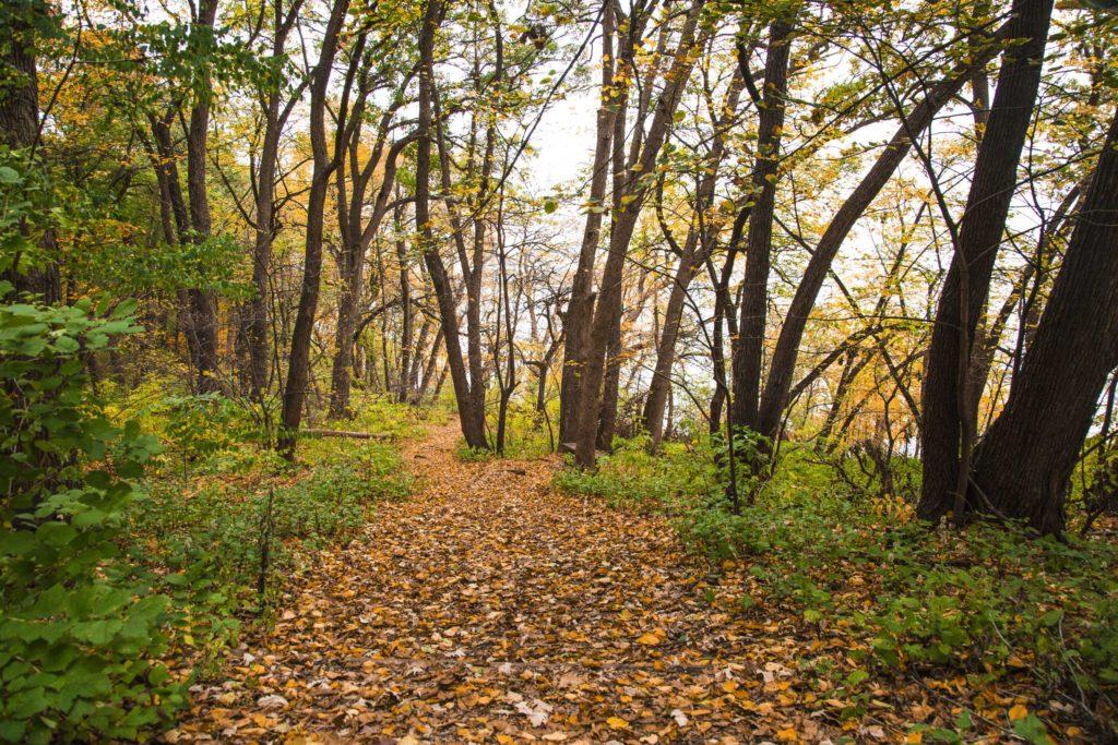 Muir Woods of Lakeshore Nature Preserve