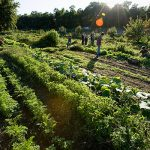 Harvest Handouts