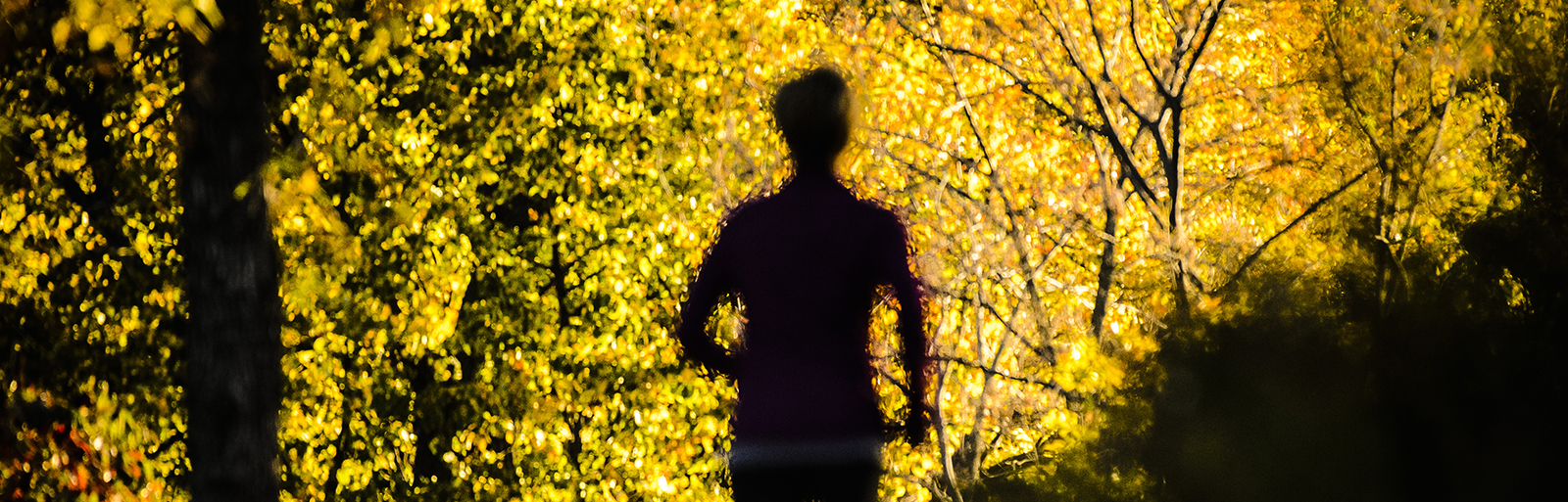 Seen in impressionist-view, a woman runs out of the shadows along a path of golden-hued tree foliage at Picnic Point at the University of Wisconsin-Madison during autumn on Oct. 14, 2015. The area is part of UW-Madison's Lakeshore Nature Preserve. (Photo by Jeff Miller/UW-Madison)